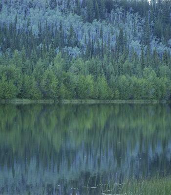 BA26 Comunicar desde el Corazón/Alaska