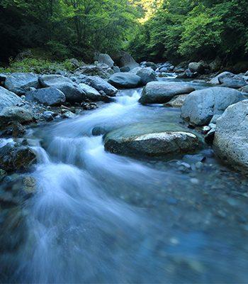 La comunicación consciente con el ser del agua – Pago previo