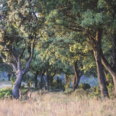 tarde en la Sierra de la Culebra